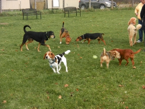 A group of off leash dogs at our dog training Calgary session
