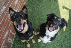 We help reactive dogs in Calgary become like these two happy pups!